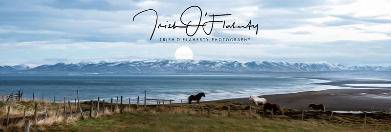 equestrian-photographer.jpg