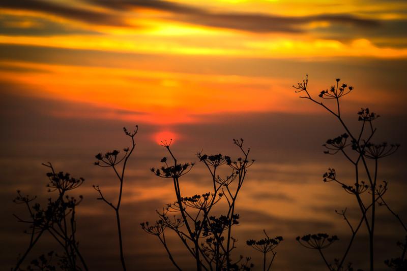 January 28 - Sun on flower.jpg