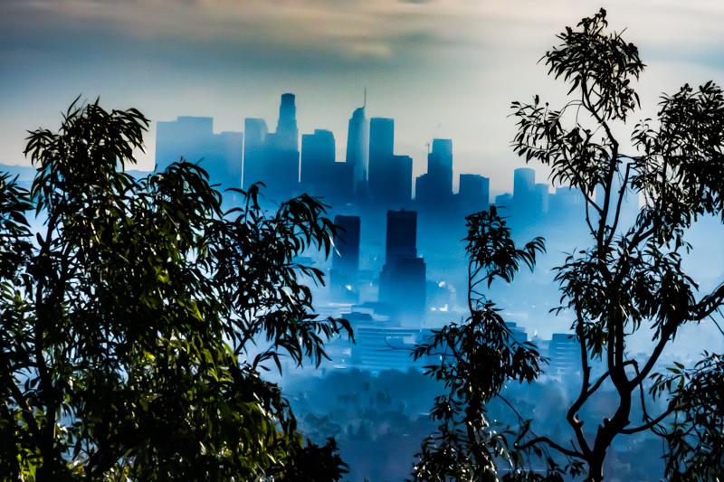 January 10 - City within the trees, Los Angeles.jpg