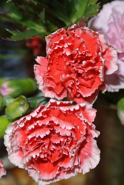 2013-09-18 Bloemen gekregen 03.JPG
