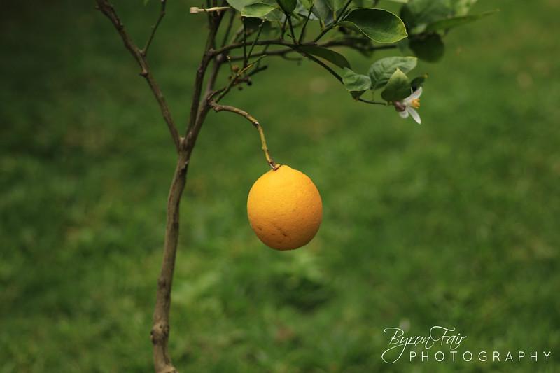 The lemon