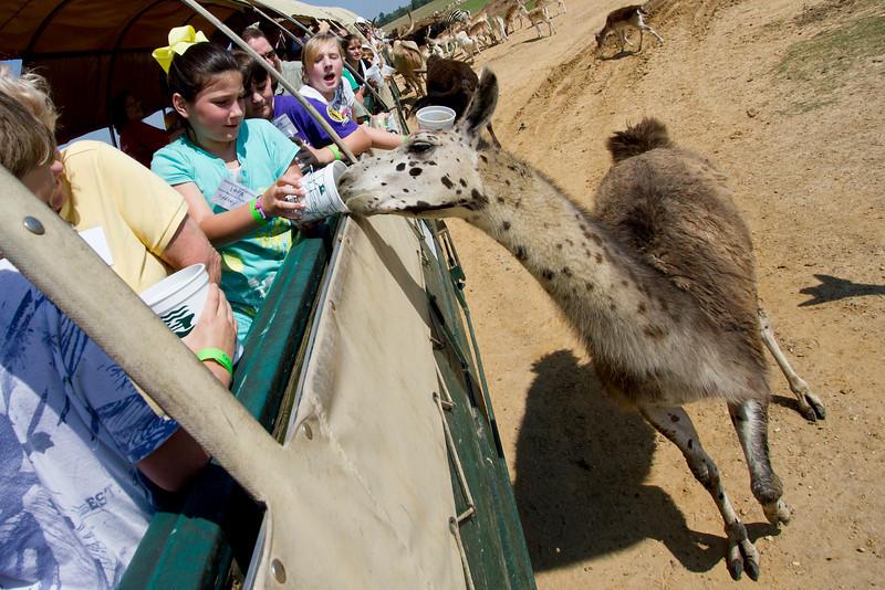 2011 Picnic, Global Wildlife Center