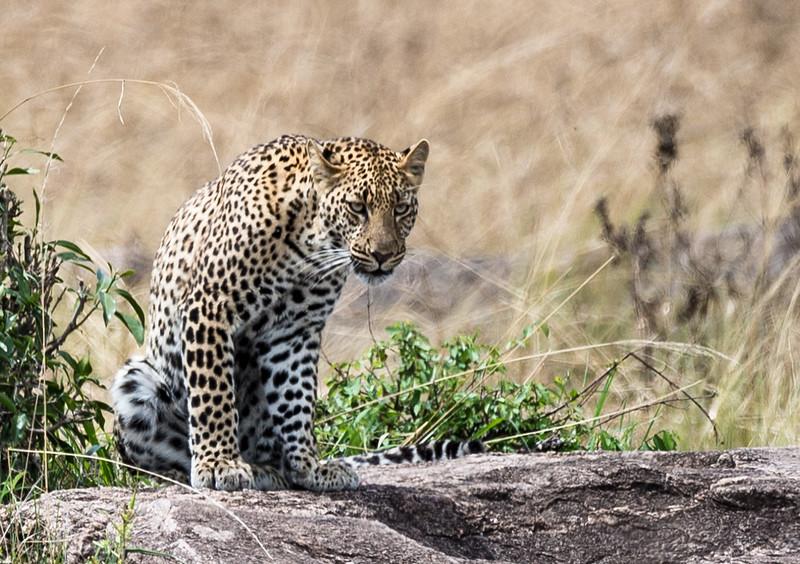 Kenya042.jpg