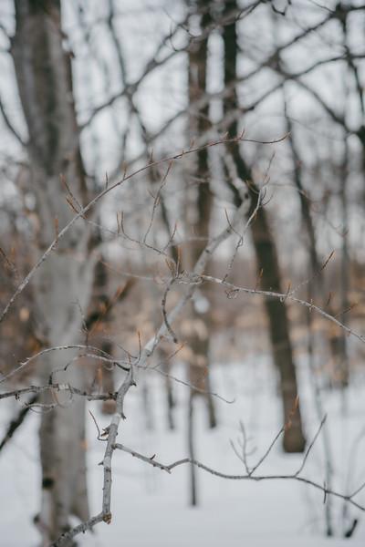 AVS_EcoPreserve_Winter2021-17.jpg