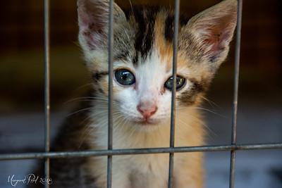 SPAZ kittens