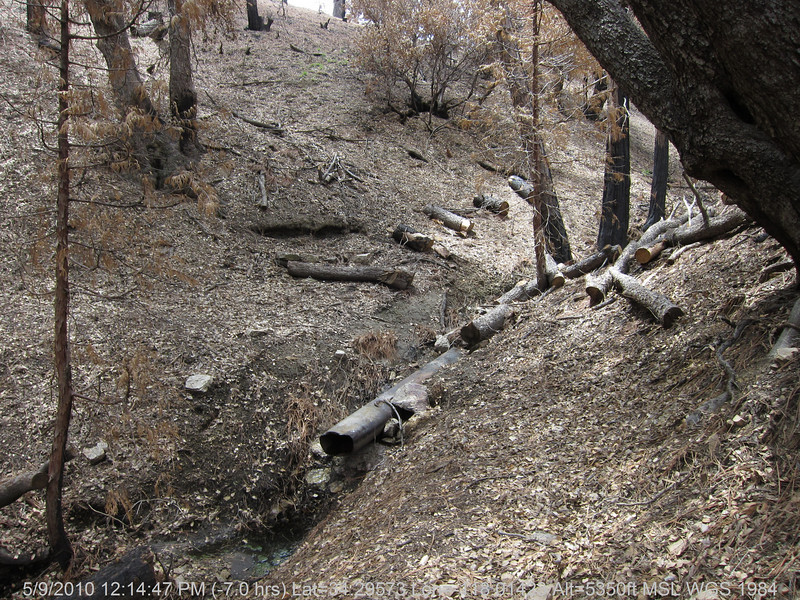 20100509099-Trail Recon, Silver Moccasin-Charlton Connector Trail.JPG