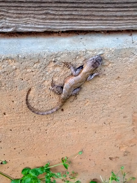 reptile-002.jpg