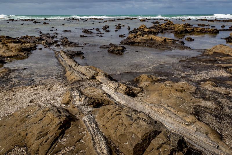 Versteinerte Baumstämme an der «Curio Bay»