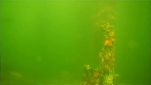 Diving Claremont Yatch Club 2015