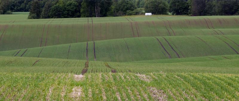 Grashøsting2011-156