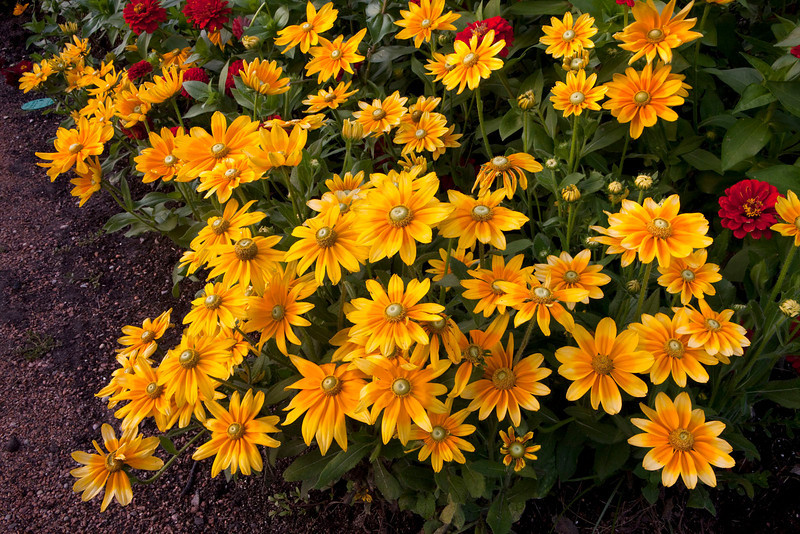 Cluster of yellow flowers