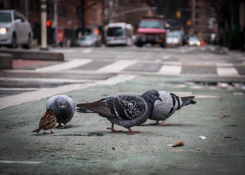 Meatsnacking district Birds.jpg