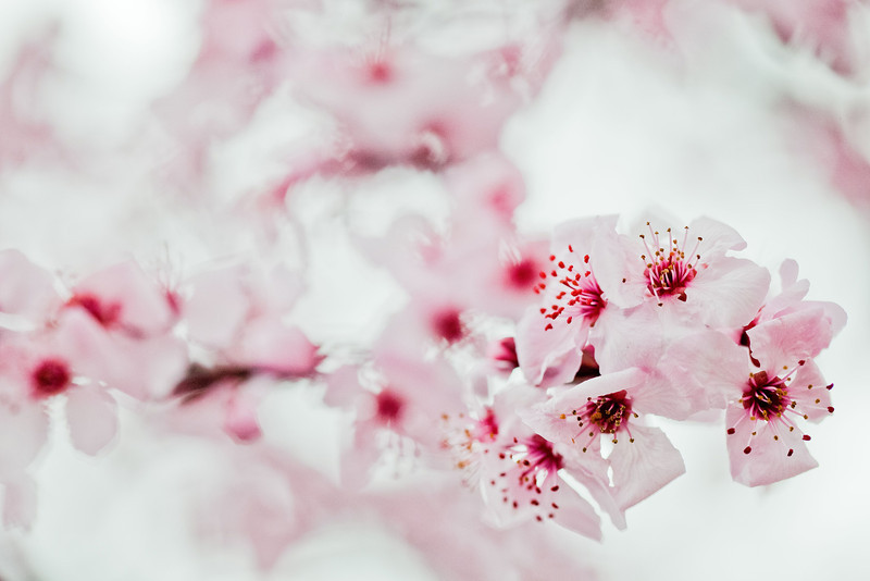 W7-Pink.jpg