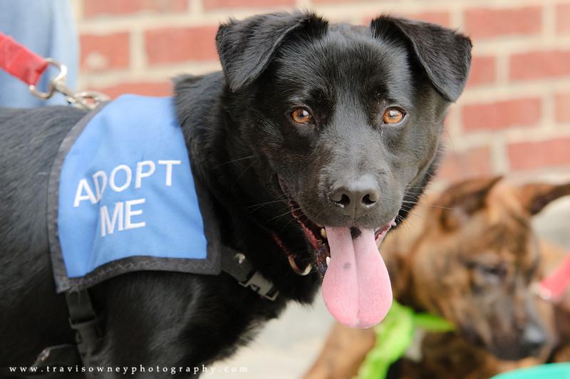 20110514 PetSmart Adoption Event-54.jpg