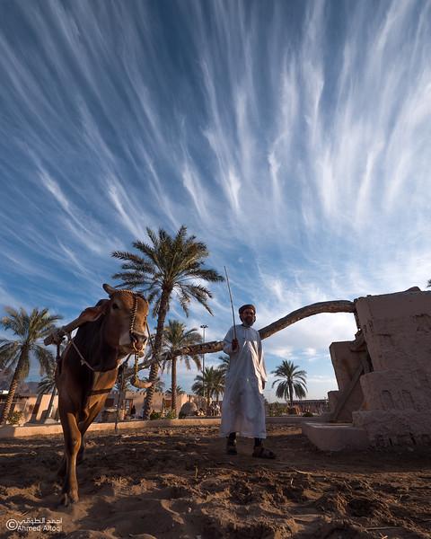 P1229115-Edit (1)- Oman.jpg