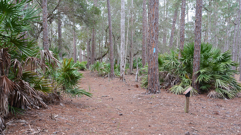 Pine flatwoods and sign