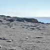 Piedras Blancas Elephant Seal Rookery