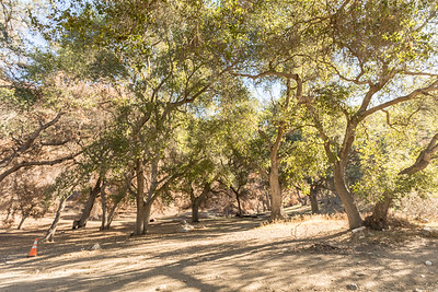 Sable Ranch 11.18.16