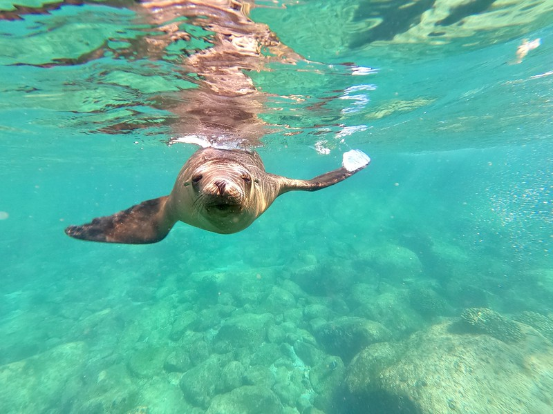 Swimming with the Sea Lions at Los Islotes from La Paz Mexico