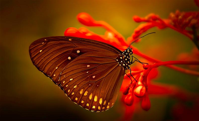 Butterfly-079.jpg