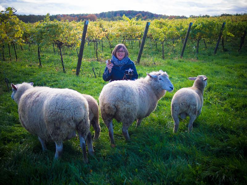 hoity toity dana and sheep.jpg