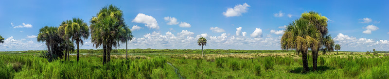 Panorama along the St. Johns River floodplain