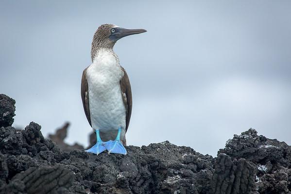 2013-06 Galapagos Islands
