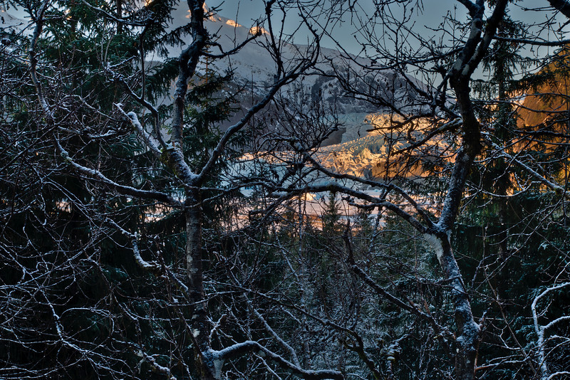 Through the branches on the East glacier trail in Juneau, afternoon.