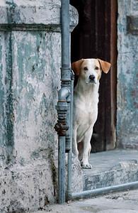 'Hola Seniora'   Canines of Cuba©