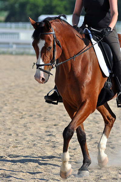 Horses July 2011 121a.jpg