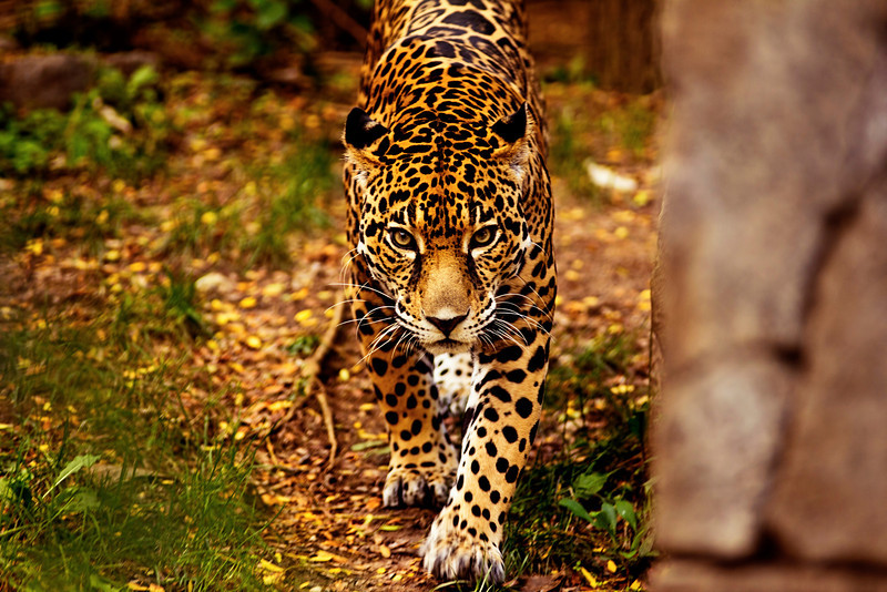 Philadelphia Zoo 559-2.jpg