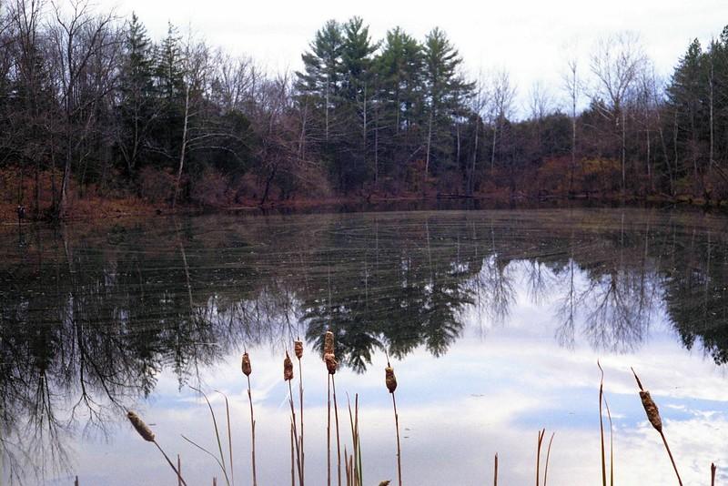 Pond in Winter - Bachelor Preserve