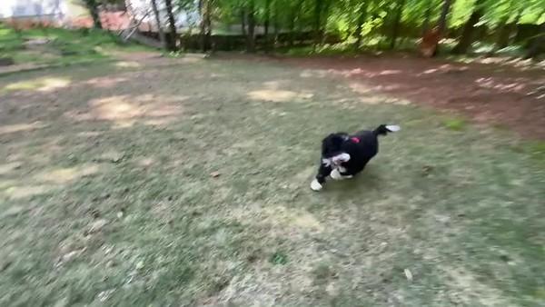 Enzo Training Video