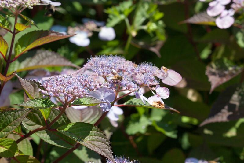 2009 06 30_NY Botanical Gardens_0681.jpg