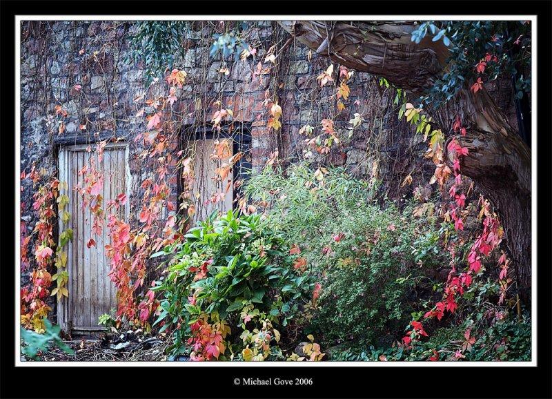 Garden colour riot Clifton (68688936).jpg