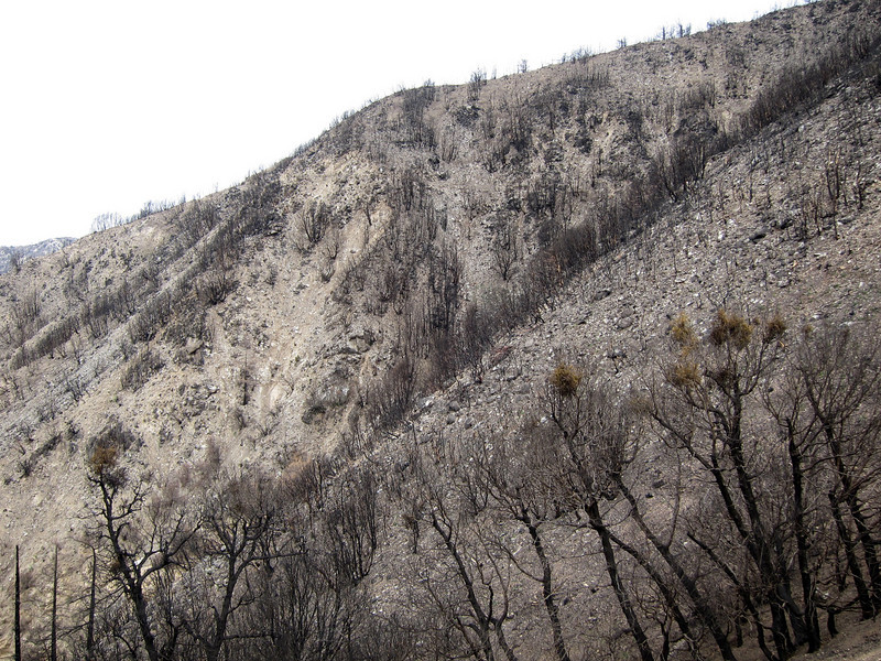 20100110023-Sam Merrill Trail Maintenance.JPG