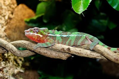 MA Chameleon 2011