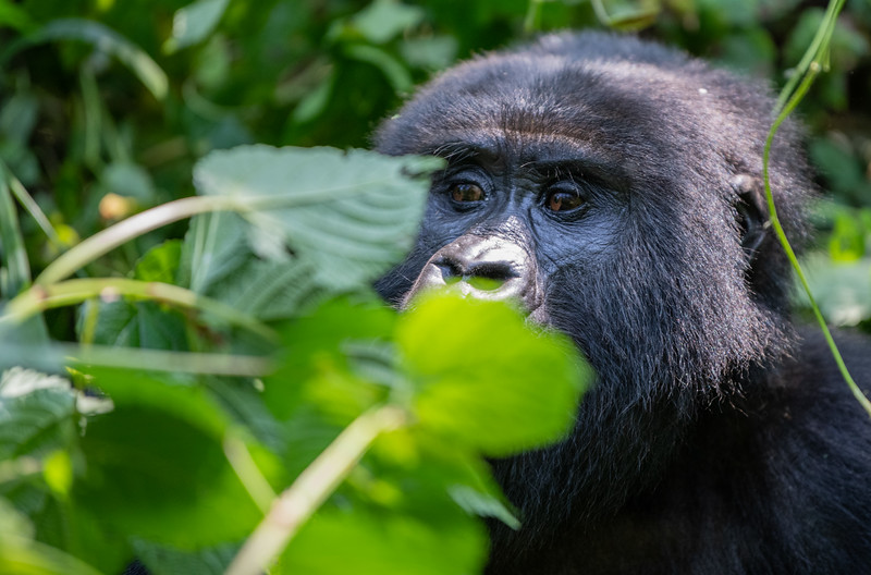 Uganda_T_Gor-1006.jpg