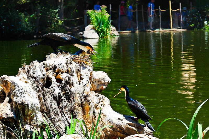 Wild Animal Park-9