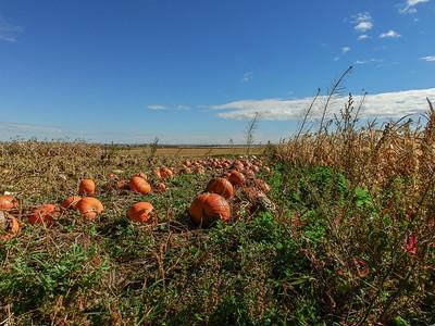 9-124-16 *Pumpkin Patch