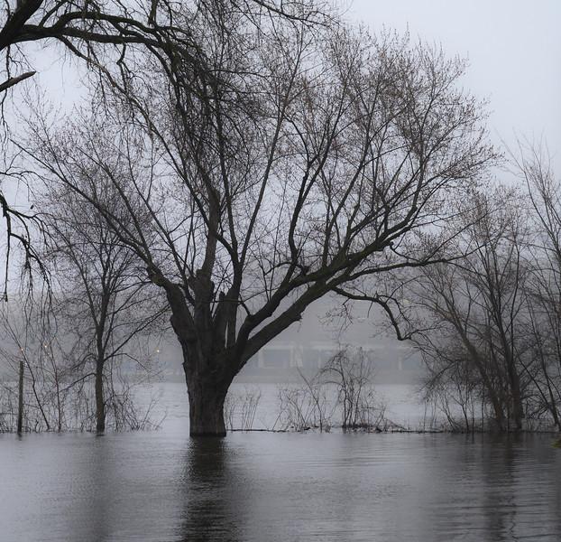 04-07-2020-fog-3.jpg