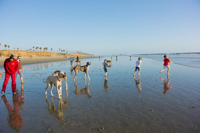 dogs_beach-44.jpg