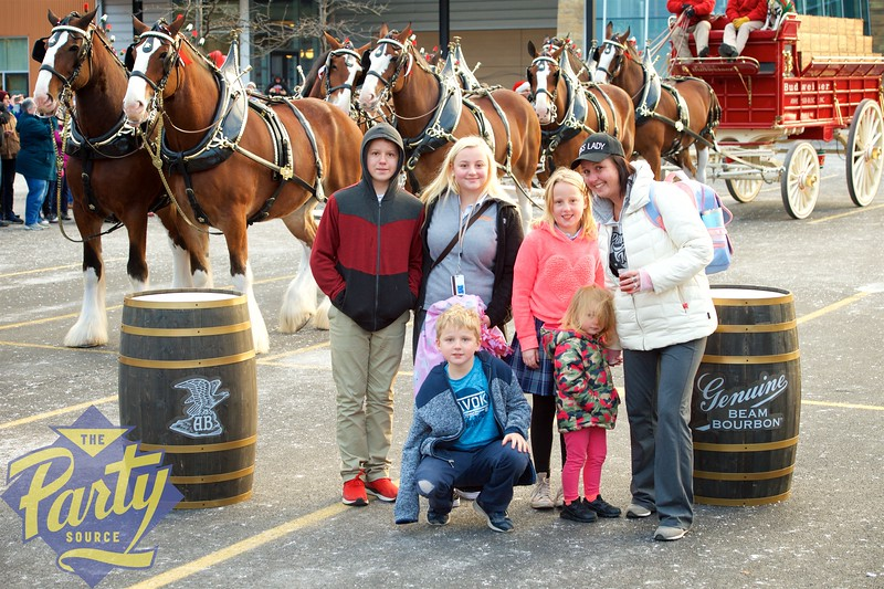 Clydesdale Portraits 129.jpg