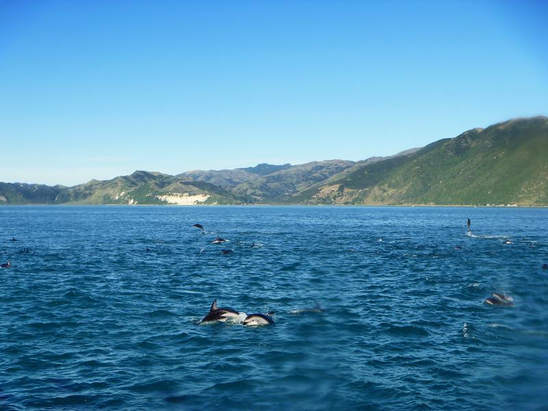 DolphinSwim_1_blog.jpg