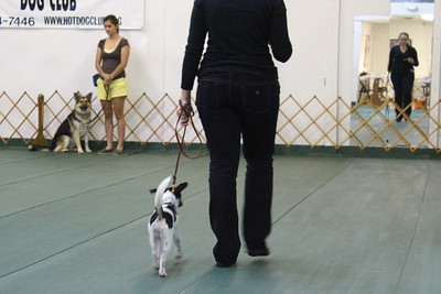 Classes Obedience and Rally