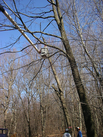 2006-03 Tree Work
