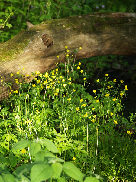 Just some pretty yellow flowers by a fallen log.
