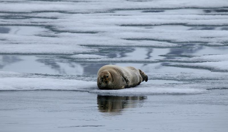 Svalbard_0137.jpg