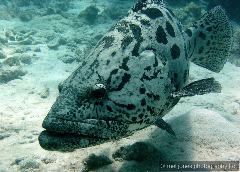 Barrier Reef 044.jpg