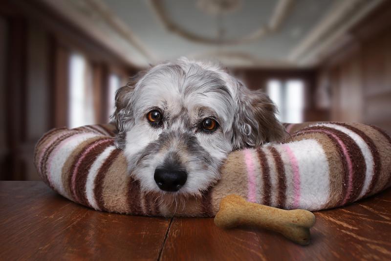 Roxboro-chien-3.jpg